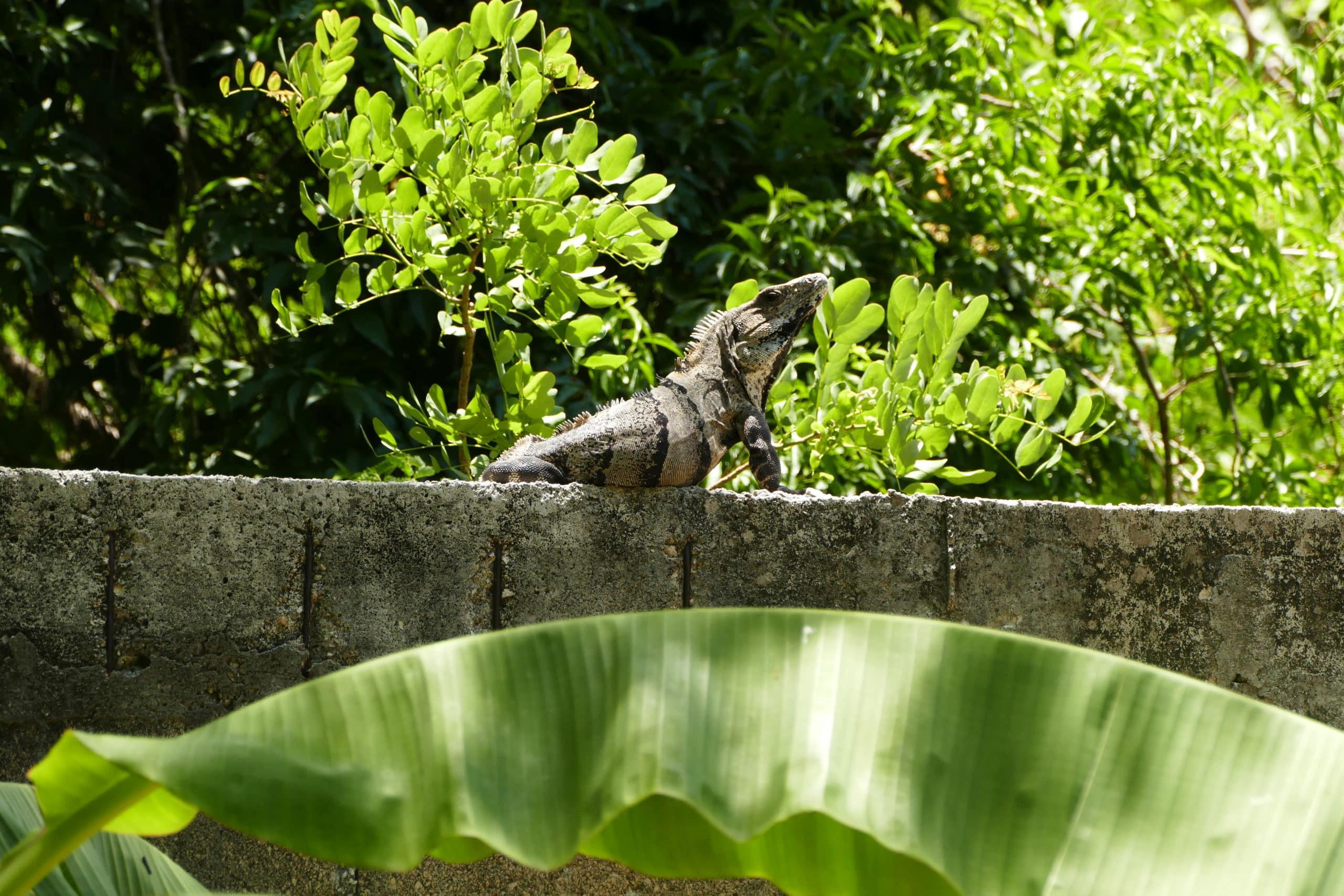 yucatán-mexiko-cancún-reisetipps-reiseblog-tipps-cenote