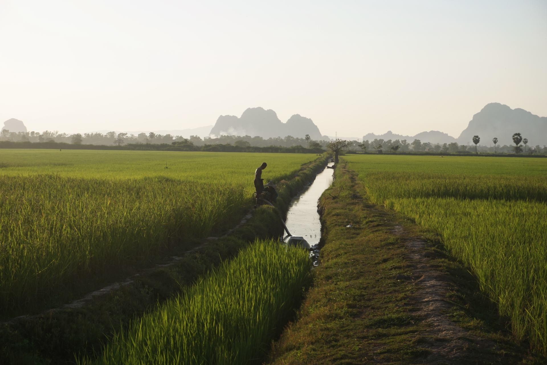 Reisfelder in Hpa-An