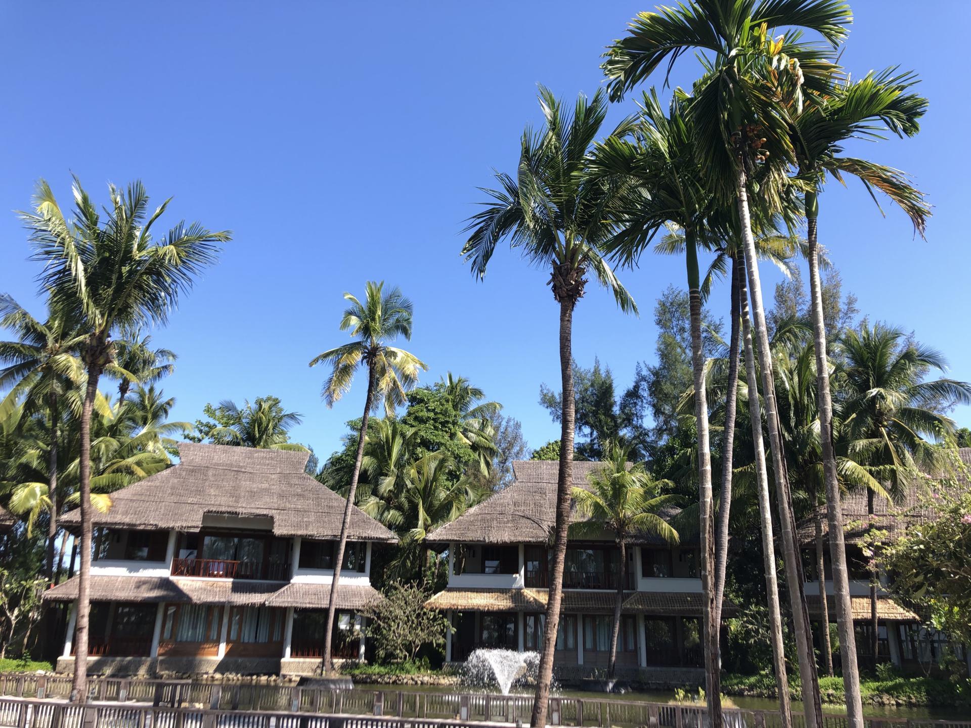 Hilton Ngapali-Myanmar-Palmen